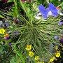 WHEELBARROW PLANTS