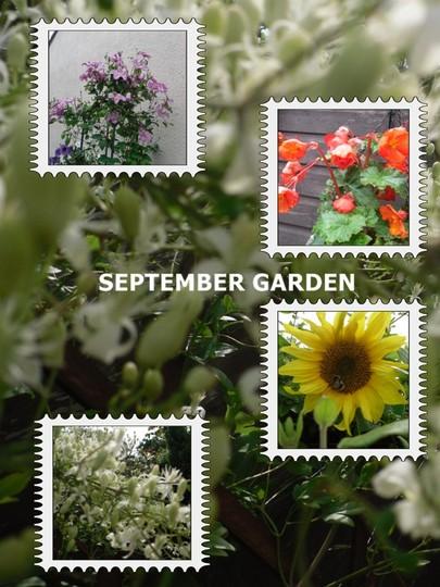 September garden collage