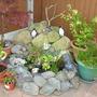 Garden_sept_24th_2010_022