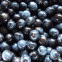 Sloes_for_making_sloe_gin_..