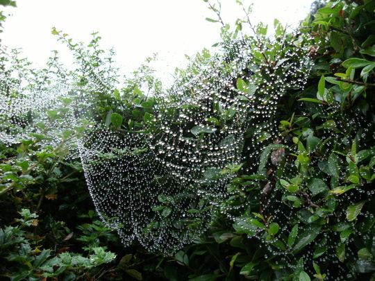 Cobweb decoration