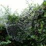 Cobweb decoration