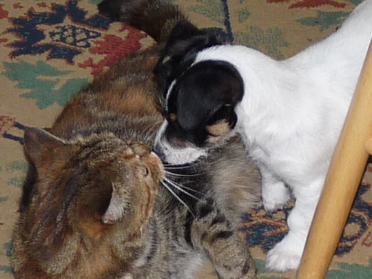 Gizz-a-kiss Pops!....:o))