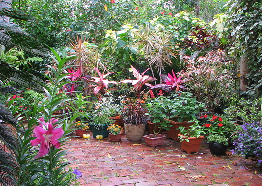 Mid-Spring Downunder: Colour in the Courtyard