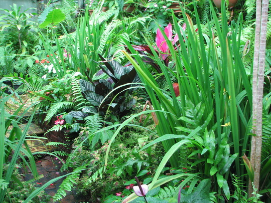 Mid-Spring Downunder: Colourful foliage in the Greenhouse/Shadehouse Garden