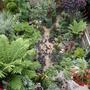 My_garden_2010_173