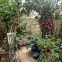 My_garden_2010_224
