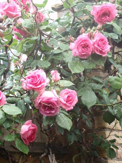 My_garden_2010_190.jpg