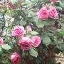 My_garden_2010_190