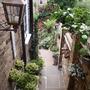 My_garden_2010_258.jpg