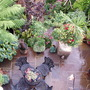 My Patio P1010258.jpg