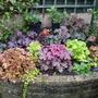Garden_001