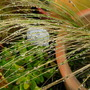 Grass after the rain (Stipa bavarica)