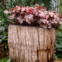 My Teak Log Planter.__2010_318.jpg