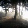 Early Morning Autumn Mist