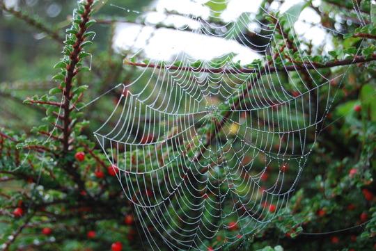 Sprder's Web
