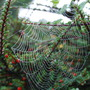 0351_spiders_web_2_oct_10