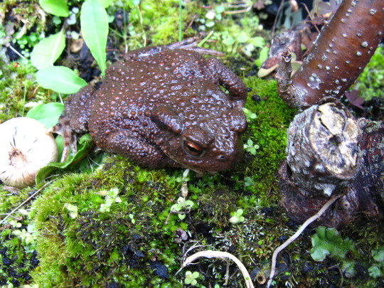 Another Mr Toad pays a visit