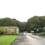 More weird and wonderful hedges, Corsham Court