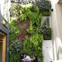 wall of plants in restaurant Osteria Caponata (Camden Town, London) 240910
