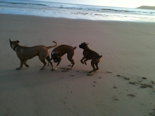~ conga on the beach~