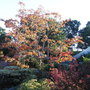 Front_garden_autumn_colours