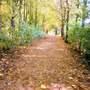 A Autumn Walk