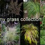my grass collection