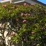 Coronado_10_08_10_68_