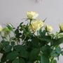 tinny roses