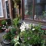 my front door garden