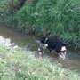 my Waterdog!
