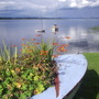 River Tay at Newburgh, Fife