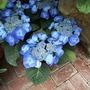 Biltmore Blue Flower
