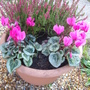 front garden pots 4