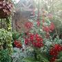 My_garden_2010_024