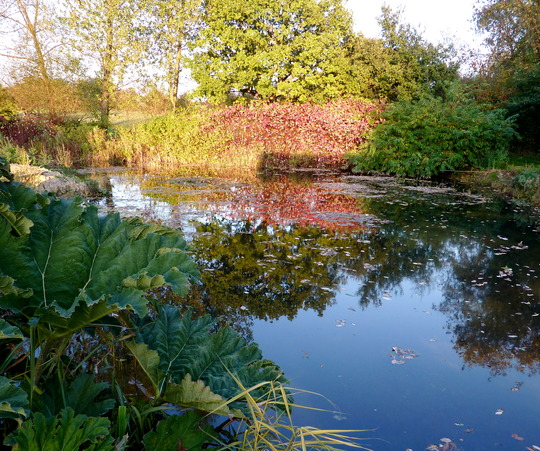My Pond In Autumn