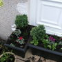 Tubs planted with heathers and Cyclamen