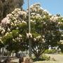 Balboa_park_07_02_10_007