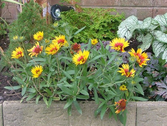 gaillardia, thanx for renaming holly ;o))