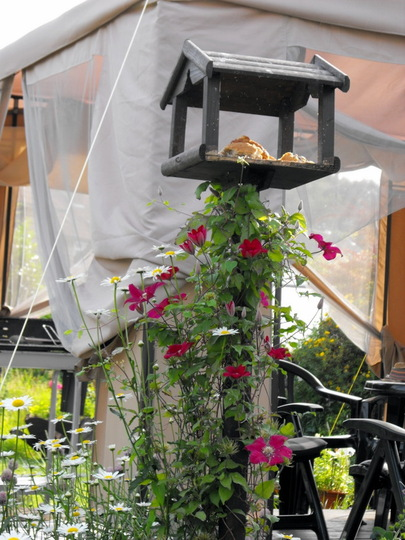 "Bird Table With Clematis ""Rouge Cardinal""Growing Up It"