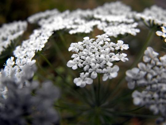 A Wild Flower?