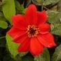 last bloom's