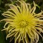 last_blooms.jpg
