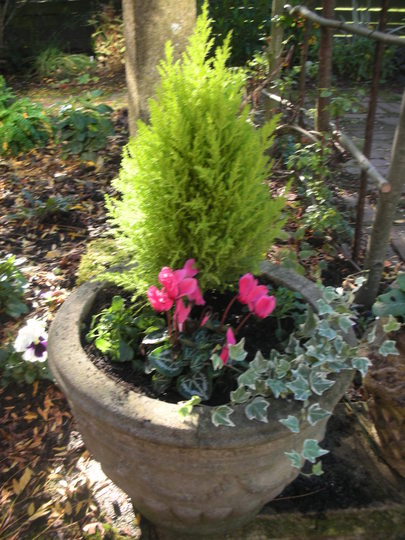 POT PLANTED UP FOR WINTER