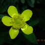 Yellow_flower_001