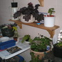Potting shed corner winter quarters