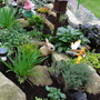 Rockery_19th_october_2010_016