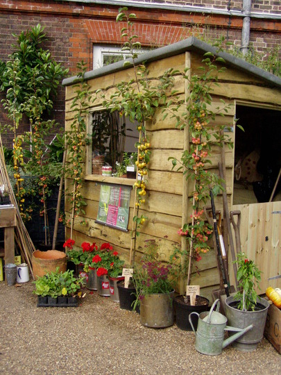 Potting shed ideas