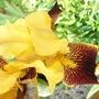 Wrong colour iris!